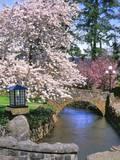 Spring Blossoms along Phelps Creek Fotografie-Druck von Steve Terrill