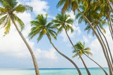 Palm Trees in the Maldives Photographic Print by John Harper