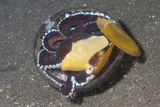 Coconut Octopus Fotoprint van Hal Beral