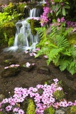Spring Flowers Add Beauty to Waterfall at Crystal Springs Garden, Portland Oregon. Pacific Northwes Lámina fotográfica por Craig Tuttle
