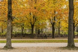 Parc De Bruxelles (Brussels Park) in Autumn (Fall) Reproduction photographique par Massimo Borchi