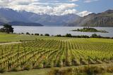 Rippon Vineyard on Lake Wanaka, Wanaka, Otago, South Island, New Zealand, Pacific Reproduction photographique par Stuart Black