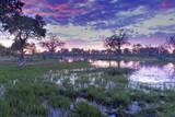 Okavango Delta, Botswana, Africa Fotografisk tryk af Angelo Cavalli
