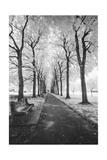 Brooklyn Botanic Gardens - Infrared Garden Walkway Photographic Print by Henri Silberman