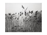 Prospect Park Lake With Grasses - Botanical Landscape Brooklyn Fotografisk tryk af Henri Silberman