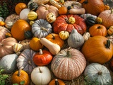 Pumpkin Display for Fall Festival Photographic Print by Richard T. Nowitz