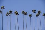 Row of Palm Trees Fotografisk tryk af Richard T. Nowitz