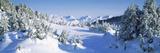 Trees on a Snow Covered Landscape, Chugach Mountains, Alaska, USA Fotografisk trykk
