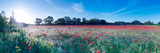 Poppy Field in Bloom, Ranworth, Norfolk, England Stampa fotografica