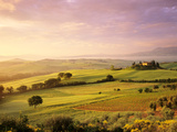 Trees in a Field at Sunrise, Villa Belvedere, Val D'Orcia, Siena Province, Tuscany, Italy Fotografisk trykk