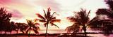 Palm Trees at Sunset, Waikiki Beach, Honolulu, Oahu, Hawaii, USA Photographic Print by  Panoramic Images