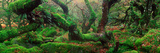 Oak Trees in a Forest, Wistman's Wood, Dartmoor National Park, Devon, England Fotografie-Druck von  Panoramic Images