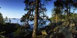 Trees at the Lakeside, Saimaa, Puumala, Southern Savonia, Eastern Finland, Finland Photographic Print