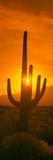 Saguaro Cactus (Carnegiea Gigantea) in a Desert at Sunrise, Arizona, USA Lámina fotográfica