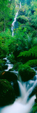 Waterfall in a Forest, Dartmoor, Devon, England Photographic Print by  Panoramic Images