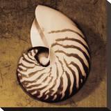 Nautilus Stretched Canvas Print by Caroline Kelly