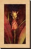 Pineapple Pingotettu canvasvedos tekijänä John Seba
