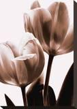 Tulip in Sepia II Opspændt lærredstryk af Caroline Kelly