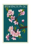 Cherry Blossoms - Washington DC Poster von  Lantern Press