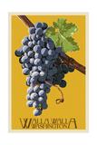 Wine Grape - Walla Walla, Washington Lámina por  Lantern Press
