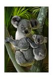 Koala Kunstdrucke von  Lantern Press