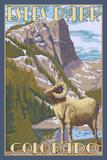 Estes Park, Colorado - Big Horn Sheep Lámina por  Lantern Press