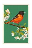 Oriole and Blossoms Affiches par  Lantern Press