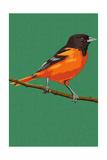 Oriole and Branch Posters par  Lantern Press