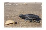 Padre Island National Seashore - Kemp's Ridley Sea Turtle Posters van  Lantern Press