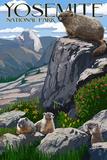 Yosemite National Park, California - Marmots Póster por  Lantern Press