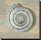 Aqua Seashell Stretched Canvas Print by Caroline Kelly