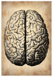 Vintage Brain Poster by  NaxArt