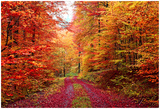 Magnificent Autumn Colors Forest In October Print by  Fotozickie