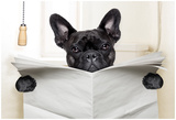 Dog Toilet Poster von Javier Brosch