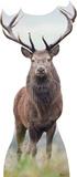 Deer Lifesize Standup Cardboard Cutouts