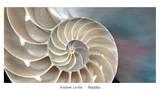Nautilus Poster von Andrew Levine