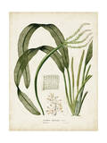 Tropical Grass I Kunst van  Vision Studio