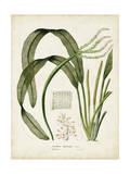 Tropical Grass I Premium Giclee Print by  Vision Studio