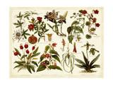 Tropical Botany Chart II Posters par  Meyers