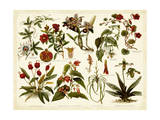 Tropical Botany Chart II Poster von  Meyers