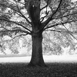 Woodland Tones III Photographic Print by Martin Henson