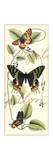 Butterfly Flight II Prints by  Vision Studio