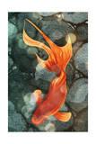 Fantail I Affiches par Alicia Ludwig