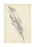 Feather Sketch III Reproduction giclée Premium par Ethan Harper