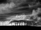 Early Morning Clouds Photographic Print by Martin Henson