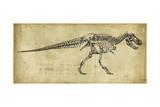 Tyrannosaurus Rex Study Art par Ethan Harper