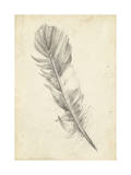 Feather Sketch I Posters por Ethan Harper