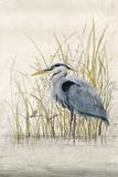 Heron Sanctuary II Prints by Tim O'toole