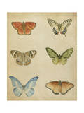 Butterfly Varietal II Premium Giclee Print by Megan Meagher