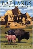 Badlands National Park, South Dakota - Bison Scene Poster